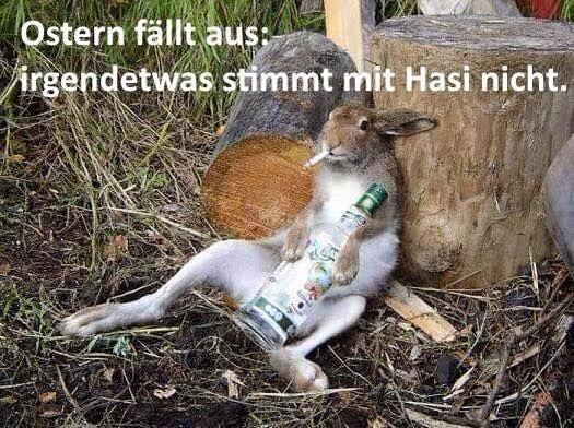 Ostern fällt aus, irgendetwas stimmt mit Hasi nicht! Feiertags-Fail vom Osterhasen