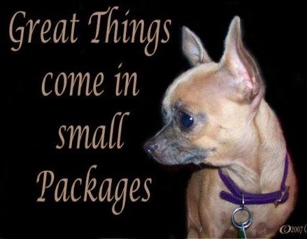 Chihuahua quote