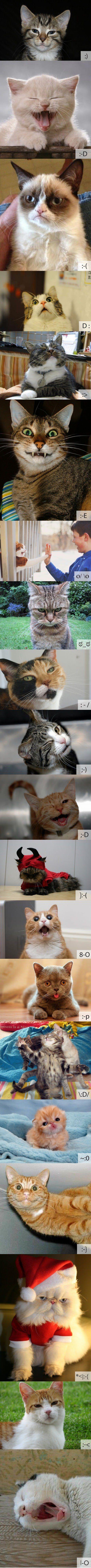 Cat emoticons.