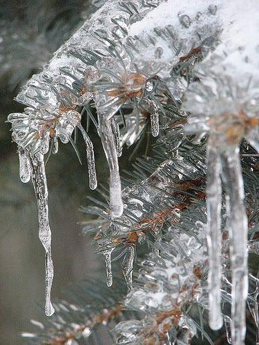 winter photo: Emma Frieh - Icecles 422357672_ef948cdc4d.jpg