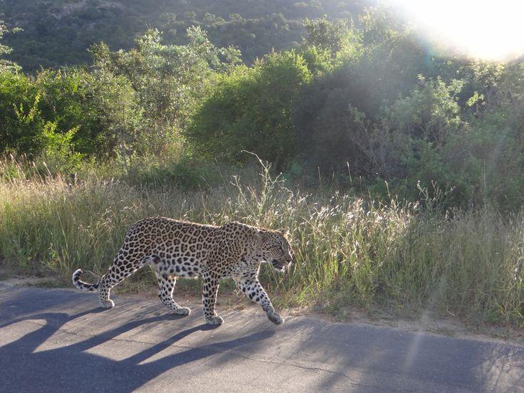 Kruger National Park Tours , krugerdrives@gmail.com