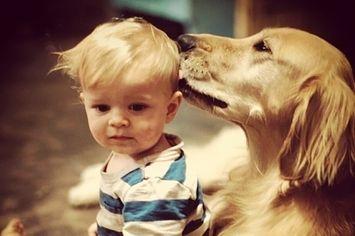 27 Perros que harían lo que fuera por los niños
