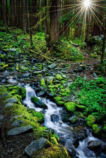 Olympic National Park Washington USA