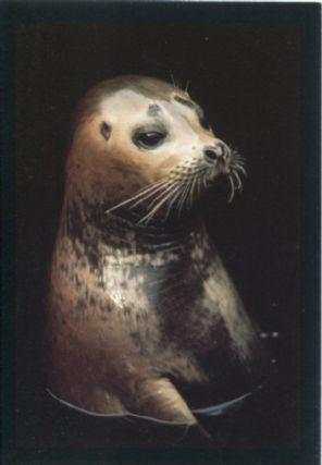 Graphique de France Postcard, Harbor Seal, California, Frans Lanting
