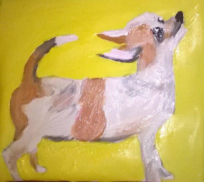 Latest chihuahua
