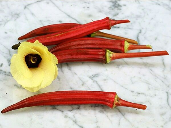 Okra merah  10k for 10 seed Contact 085777119992
