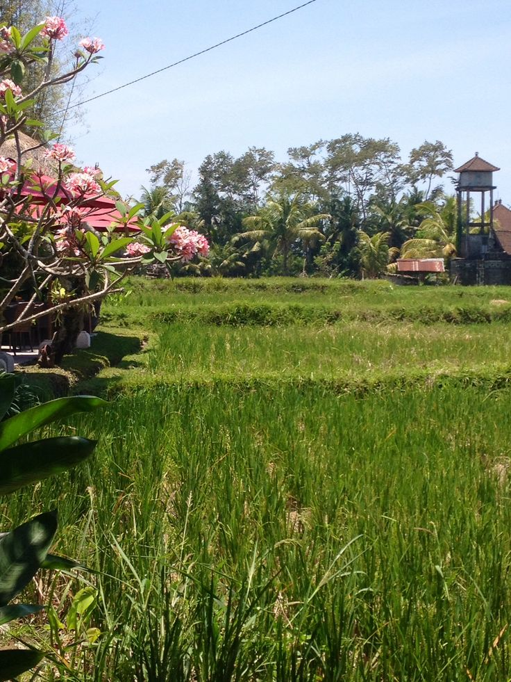 Days 7-8: Ubud, Bali, Indonesia. The traditional Balinese dance performance and some amazingly green rice fields.