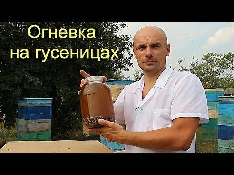 Восковая моль или огневка пчелиная. - YouTube