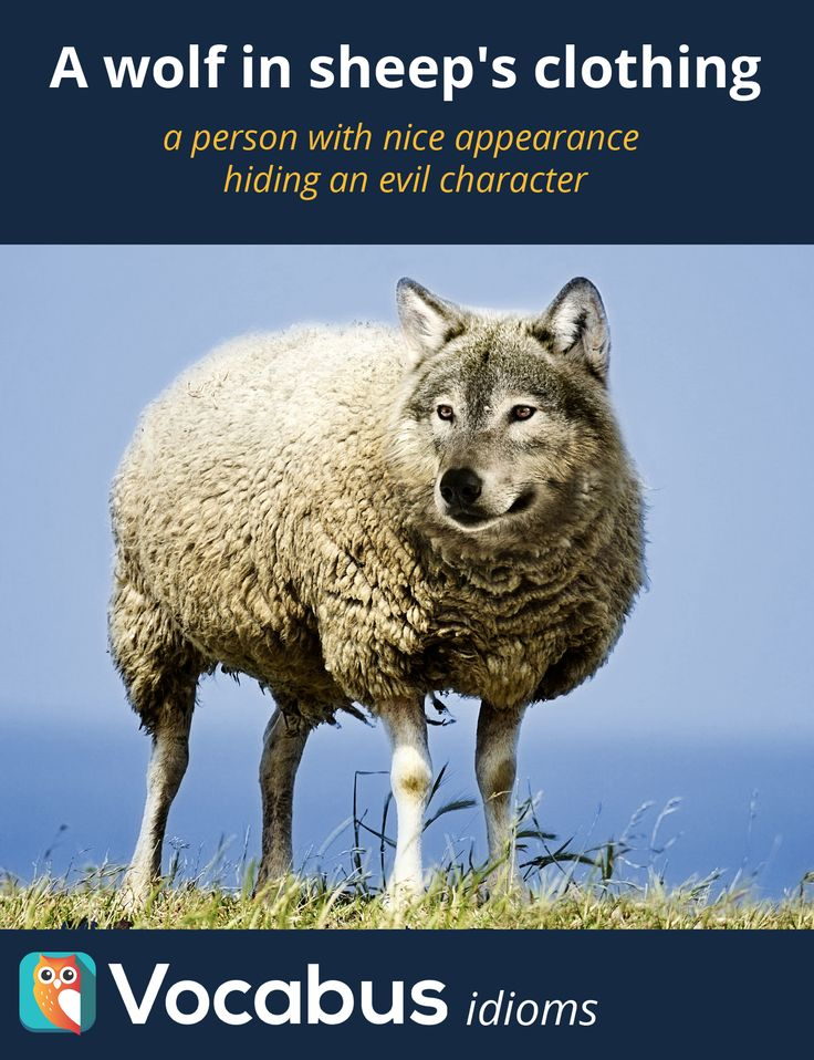 A wolf in sheep's clothing - a person with nice appearance  hiding an evil character. Nauka angielskiego, słownictwo, idiomy, słówka