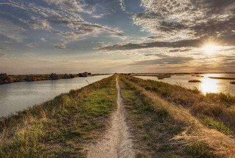 In bici sul Delta del Po: quattro itinerari per tutti - Animali a pochi passi e facili da vedere: la foce del grande fiume, tra Veneto ed Emilia Romagna, regala emozioni e spettacoli africani