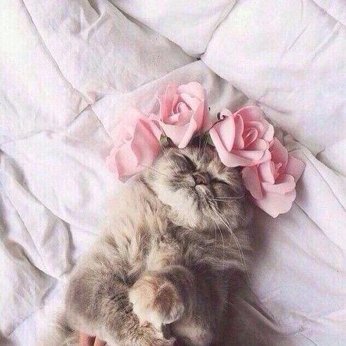 cat, cute, and flowers kép