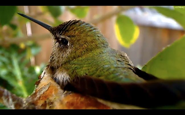 Are you watching this year's hummingbird webcams? Click through to learn more about two we're enjoying  right now!
