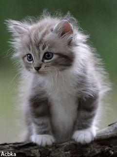 Adorable little kitten... He blinks!!!♥️ #PersianCat