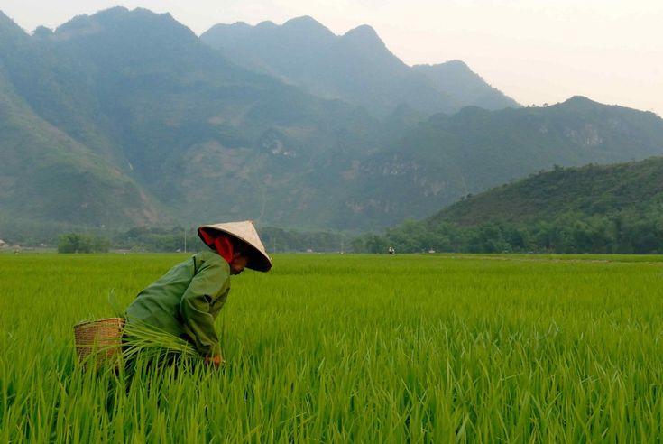 Vietnam – Un jeune Normand crée des voyages solidaires