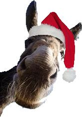 Dominic the Italian Christmas donkey web page.. really cute web site with history and more