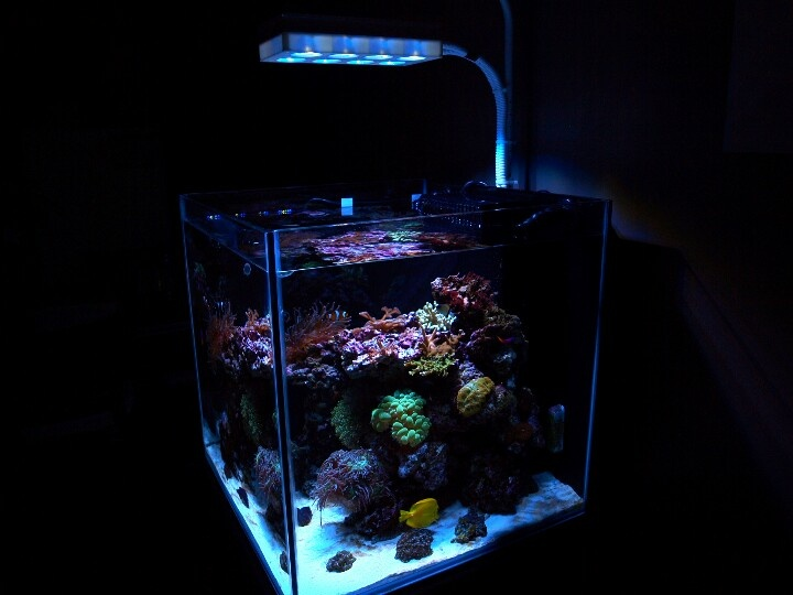 60 Gallon Cube Reef Aquarium Picoreef 39 S 60g Cube Reef