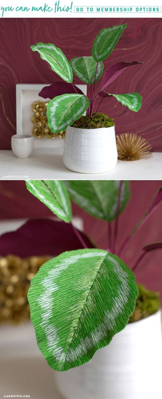 A Leaf Motif  - Make your easy crepe paper calathea plant at https://liagriffith.com/crepe-paper-calathea-plant/     #paper #papercraft #paperplant #paperart #fauxglow #diyhome #diyidea #diyinspiration #diyhomedecor #crepepaperrevival #crepepaper #crepepaperflowers #madewithlia