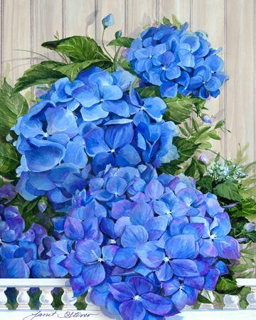 Hydrangea Heaven by Janet Stever ~ floral beauty