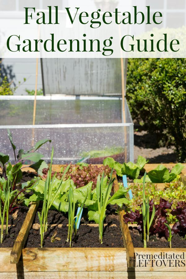207 best Gardening Grow Your Own Food images on Pinterest