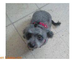 Perritaen adopción!  #Adopción #adopta #adoptanocompres #adoptar #LealesOrg  Contacto y info: Pulsar la foto o: https://leales.org/animales-en-adopcion/perros-en-adopcion/perrita-en-adopcion_i2704 ℹ  Nesecita un hogarsu familia se muda y no admiten animalestiene las 3 primeras vacunas6 añoses sociable con perros y muy cariñosa con las personasen adopción responsable. #adopta no compres#   Acerca de esta publicación:   Esta publicación NO ha sido creada por Leales.org y NO somos responsables…