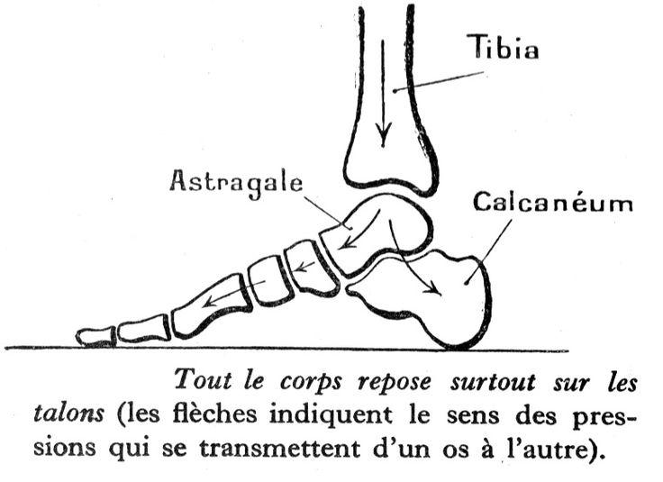 Les 42 meilleures images du tableau reflexo sur pinterest reflexologie plantaire acupression - Dessin de pied ...