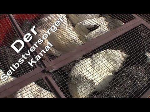 Huehner schlachten vom Stall in die Tiefkuehltruhe - YouTube