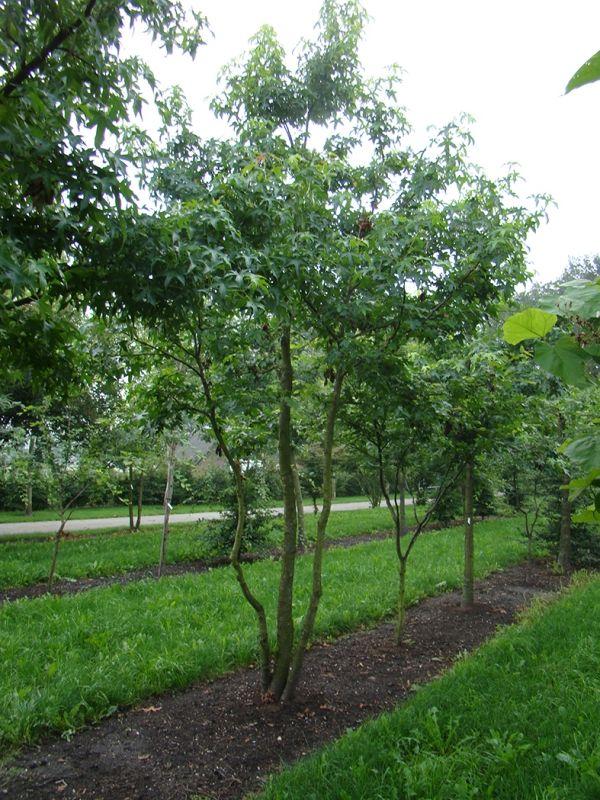Les 105 meilleures images du tableau arbres c p e multi for Arbre design jardin