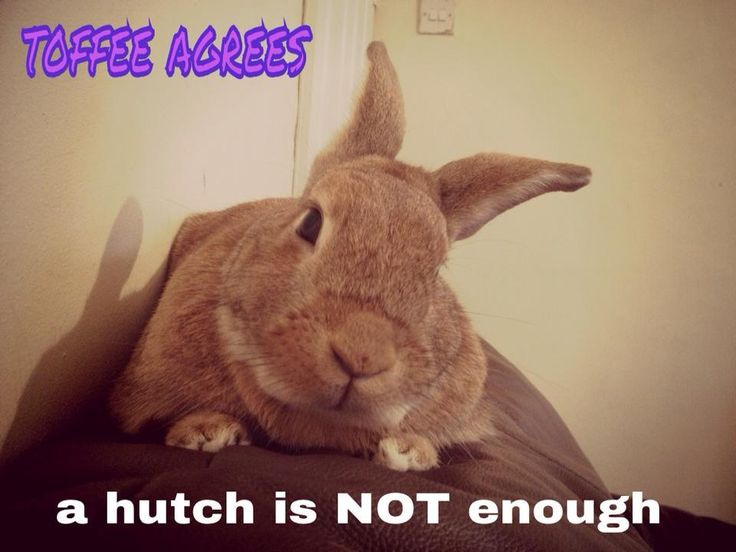 Toffee the rabbit agrees that a hutch is not enough for bunnies!