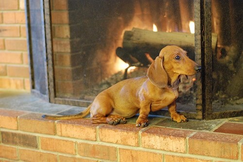 17 Best images about Das Dachshund on