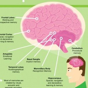 How Memory Works: an Infographic http://www.brainscape.com/blog/2012/01/how-memory-works-an-infographic/
