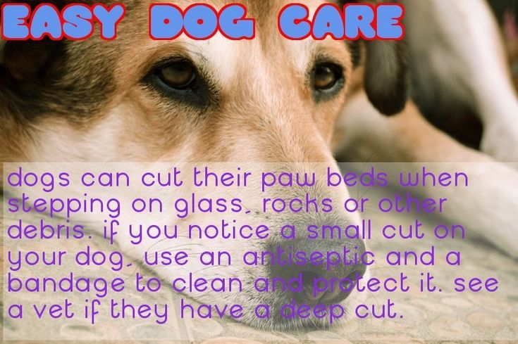 Will My Dog Be Less Hyper After Spaying Dog Neutering Recovery Home Dogs That Are Not Neutered Or Made Sterile Ar Dog Spay Neutering Dogs Dog Training Tips