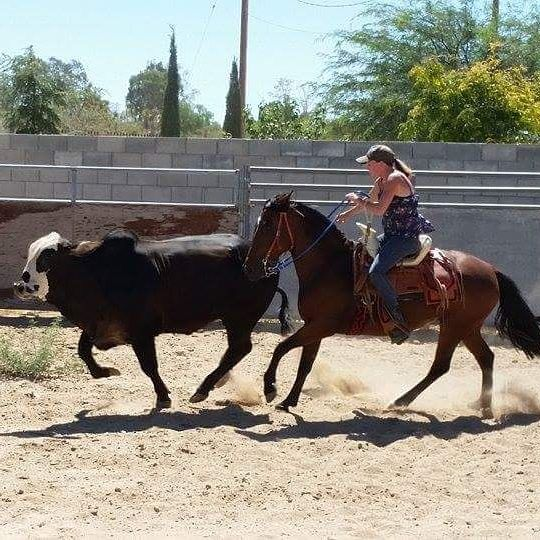 Chilean horses practice runs coleadero with Kendall Melline from Proven Spots Ranch