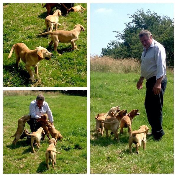 Adorable Cuckavalda puppies at Carr House Farm