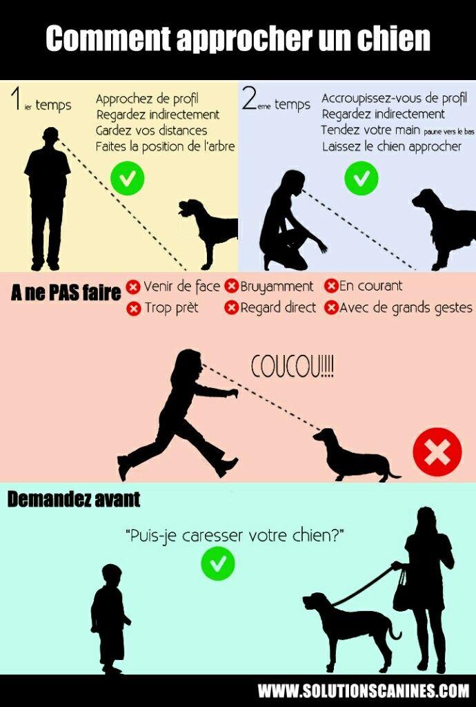 #chien #approcher #comment #conseil