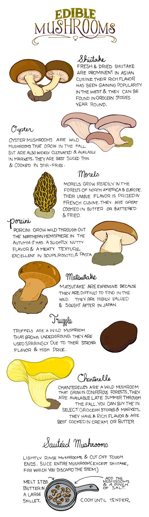 EDIBLE MUSHROOMS – venture beyond button, there's so many to choose from!