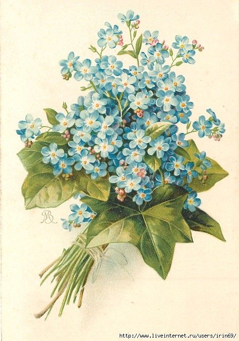 Цветы винтаж картинки