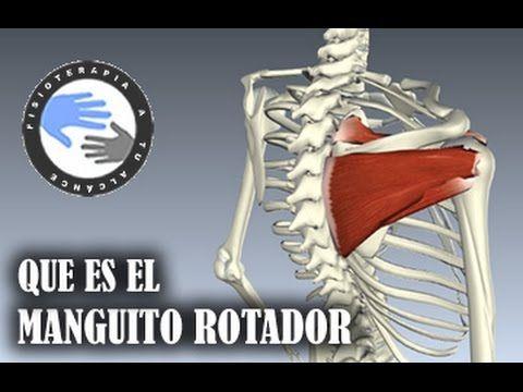 Manguito rotador, que es y que funcion tiene / Fisioterapia a tu alcance