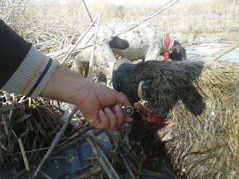 Hunter pig attack domuz saldırısı: Hunter pig attack domuz avı izle domuz avı oyunu domuz avı… #NasılYapılır #domuzavı2015 #domuzavı2016