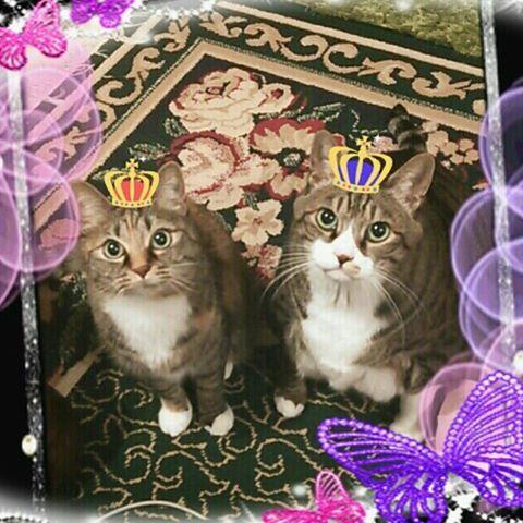 皆さん💕こんにちは~🎵日がだんだん長くなって日射しが暖かくなってきましたね~😊🎵🎵皆さんの所は桜咲きましたか🌸🌸🌸 今日は、みみ&みゆ二人揃って#猫王祭 参加させて頂きます🎵😸😸🎵 #小さな猫が大きな癒しにニャる #フロリダのたまちゃん応援隊 #寧々ちゃん応援隊 #にゃんこ相撲部 #無敵の親バカ同盟 #シブにゃん隊over10 #はちわれ部 #はちわれ#ワニ虫ファミリー #ワニ虫族 #愛猫熟女会 #愛猫#愛猫同好会 #ブヒブヒ倶楽部 #もちぽよ部 #ねこ部#ペコねこ部 #ねこすたぐらむ #ねこら部 #みんねこ #picneko #にゃんだふるらいふ #にゃんこ#にゃんこ部#トラ猫 #東北にゃんこ部#東北ねこ部#宮城県#宮城