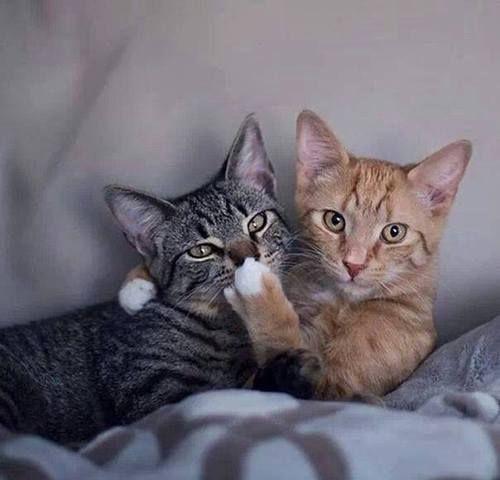 artonsun - cat images