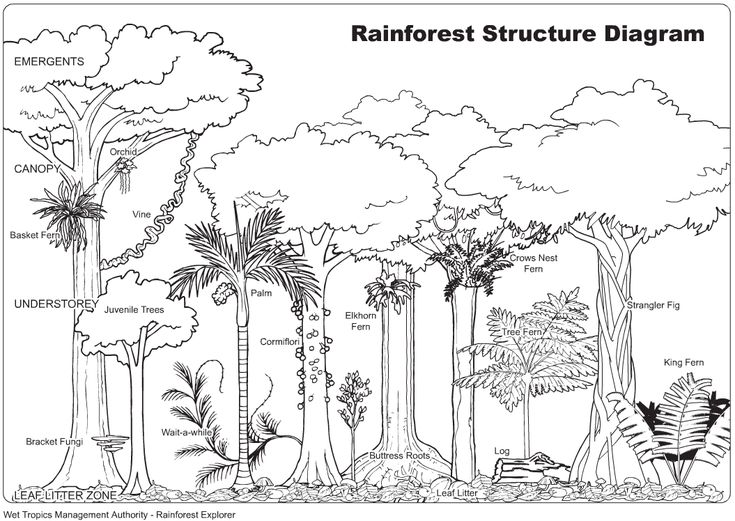 View Gallery With 33 Tropical Rainforest Drawing Images Forest