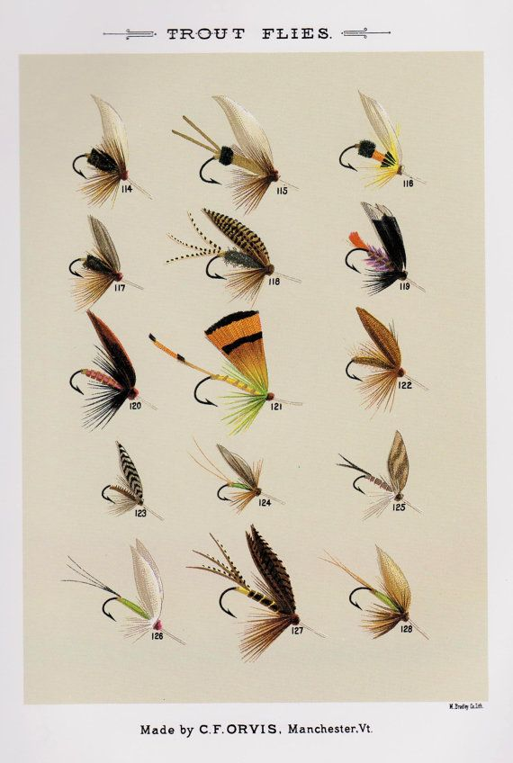 latest vintage fly fishing print trout flies print by with. Black Bedroom Furniture Sets. Home Design Ideas