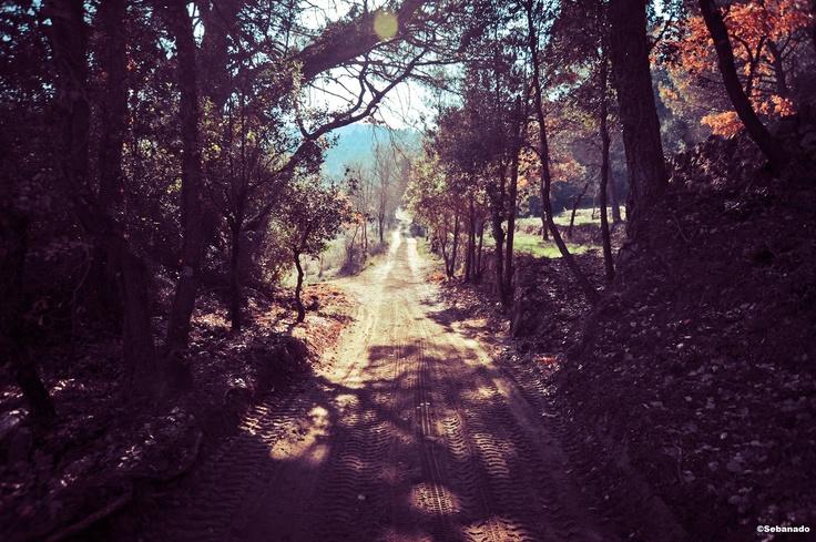 Wooden coverage on the road of the domain  Couverture boisée sur la route du domaine  #chateau #fontainebleau ©Sebanado