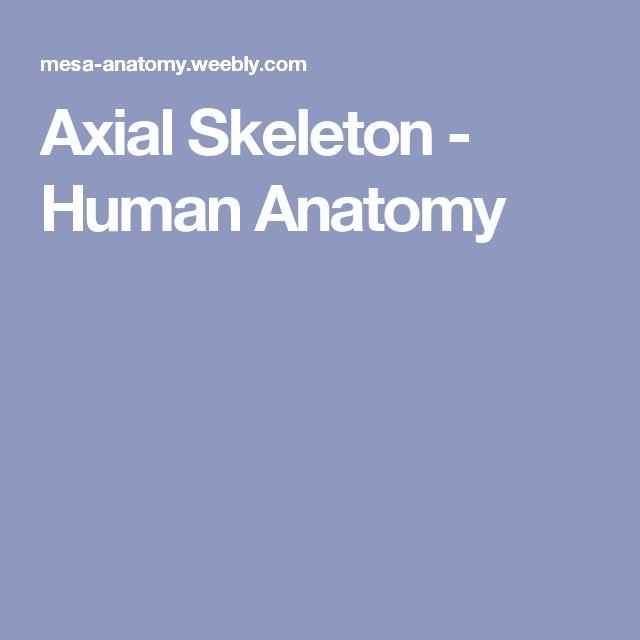 16 best skeletal images on pinterest axial skeleton facial bones axial skeleton human anatomy fandeluxe Gallery
