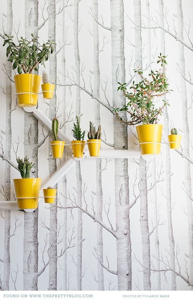 Tree wallpaper. Home: Etienne Hanekom. Image: Yolandé Marx
