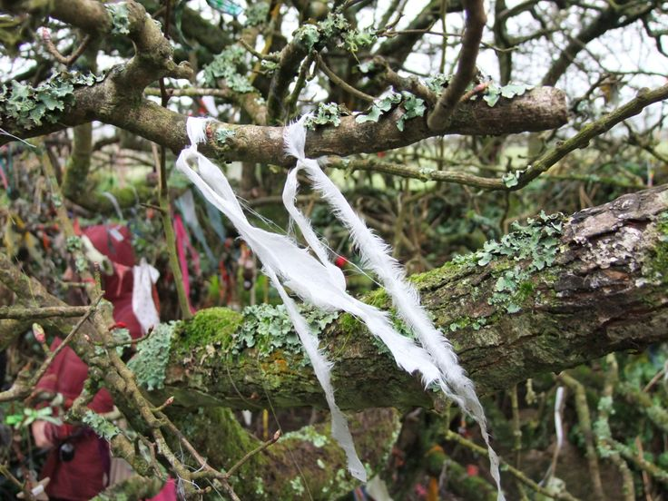 Offering at Holywell, Cornwall, prayer ties / Clooties