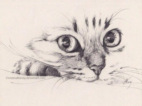Imagen De Cat Pencil And Drawing