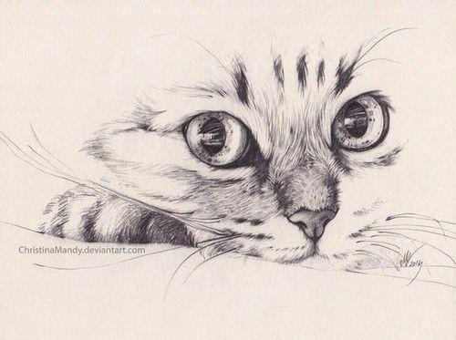 Imagen de cat, pencil, and drawing                                                                                                                                                                                 Mais