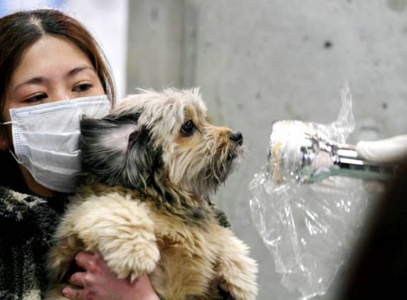 (File Image) A woman holds her dog as they are scanned for radiation in Fukushima Prefecture - AP