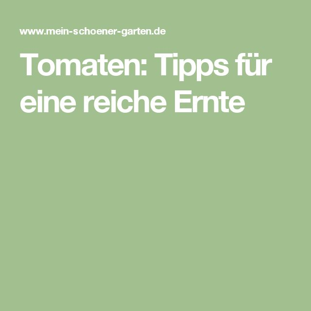 Tomaten: Tipps für eine reiche Ernte